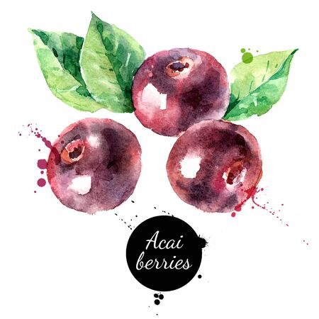 Watercolor hand drawn acai berry illustration. Vector painted sketch isolated on white background. Superfoods poster Vector Illustratie