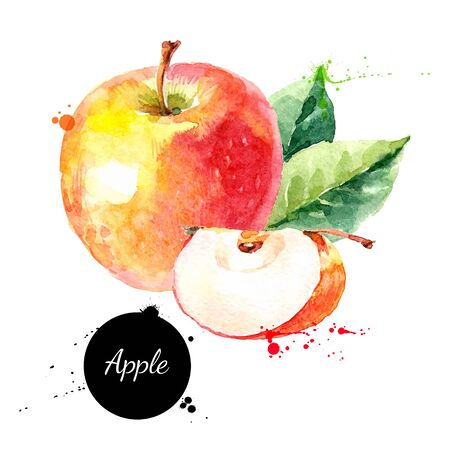 Watercolor hand drawn yellow and red apple. Isolated eco natural food fruit illustration on white background
