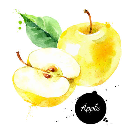 Watercolor hand drawn yellow apple. Isolated eco natural food fruit illustration on white background 向量圖像
