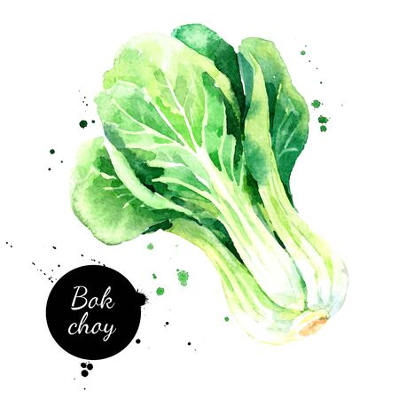Watercolor hand drawn bok choy vegetables illustration. Vector painted sketch isolated on white background. Superfoods poster