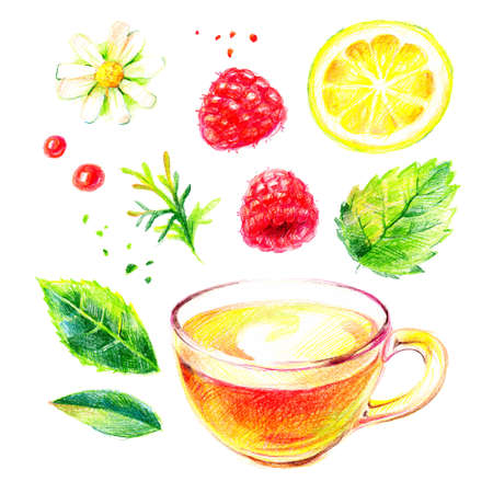 Watercolor color pencil hand drawn herbal tea illustration set. Painted sketch isolated on white background