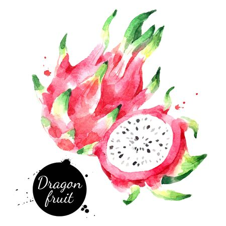 Watercolor hand drawn dragon fruit pitahaya illustration. Vector painted sketch isolated on white background. Superfoods poster