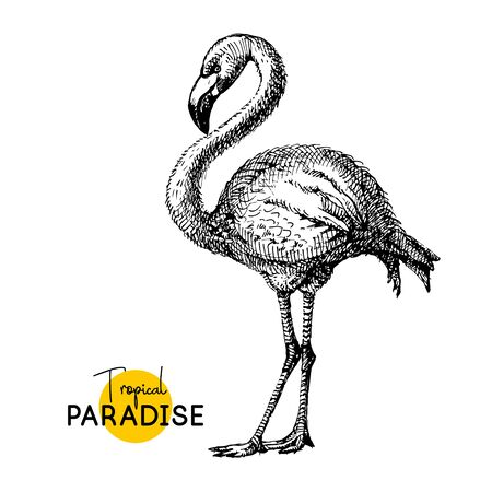 Hand drawn sketch black and white vintage exotic tropical bird flamingo. Vector illustration isolated object