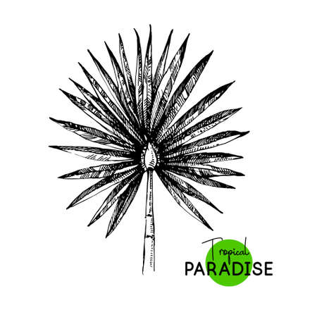 Hand drawn sketch tropical paradise palm leaf plant background. Black and white illustration