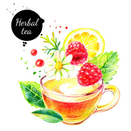 Watercolor color pencil hand drawn herbal tea illustration. painted sketch isolated on white background