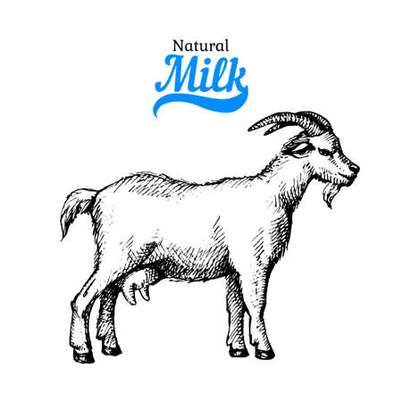 Hand drawn sketch milk products background. black and white vintage illustration of goat