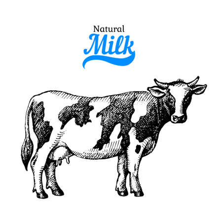 Hand drawn sketch milk products background. black and white vintage illustration of cow