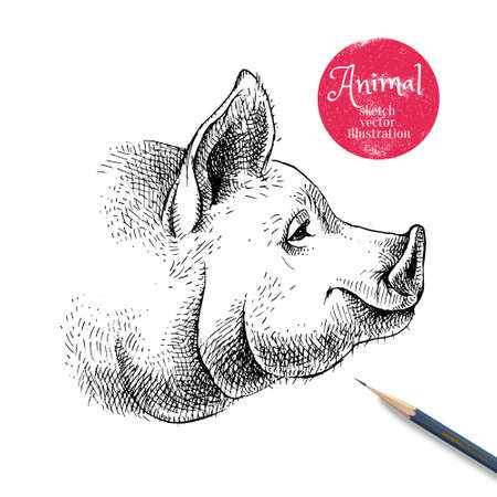 Hand drawn sketch pig head illustration. Isolated profile portrait on white background. Symbol of new year 2019 向量圖像