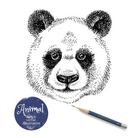 Hand drawn sketch panda head illustration. Isolated cute portrait on white background