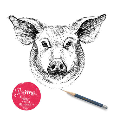 Hand drawn sketch pig head illustration. Isolated portrait on white background. Symbol of new year 2019