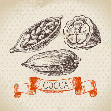 Hand drawn sketch cocoa chocolate product background. Vintage vector illustration of natural healthy sweet food