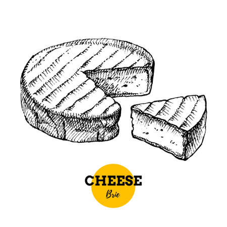 Hand drawn sketch cheese brie background. Vector illustration of natural milk foods