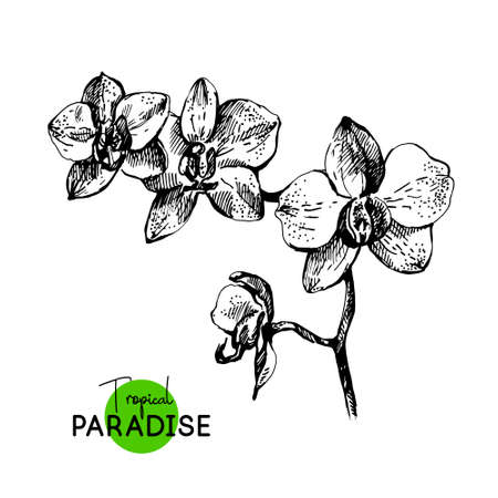 Hand drawn sketch tropical paradise plant orchid flowers background. Black and white vector illustration 向量圖像