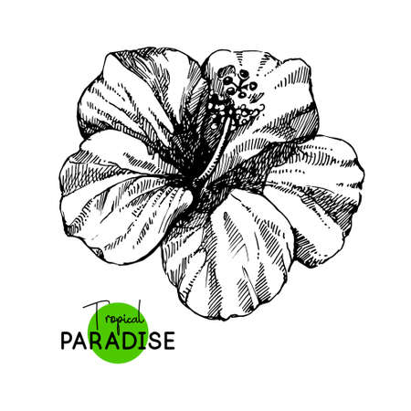 Hand drawn sketch tropical paradise plant hibiscus flower background. Black and white vector illustration