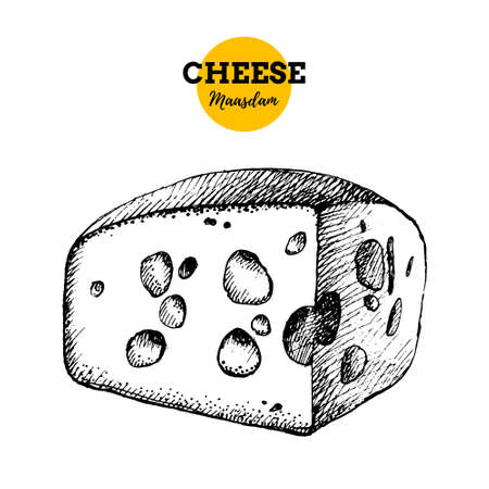 Hand drawn sketch cheese maasdam background. Vector illustration of natural milk foods 向量圖像