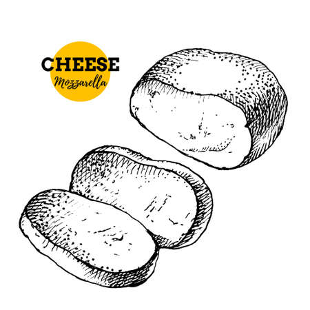 Hand drawn sketch cheese mozzarella background. Vector illustration of natural milk foods 向量圖像