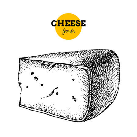 Hand drawn sketch cheese gauda background. Vector illustration of natural milk foods 向量圖像