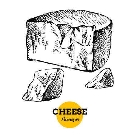 Hand drawn sketch cheese parmesan background. Vector illustration of natural milk foods