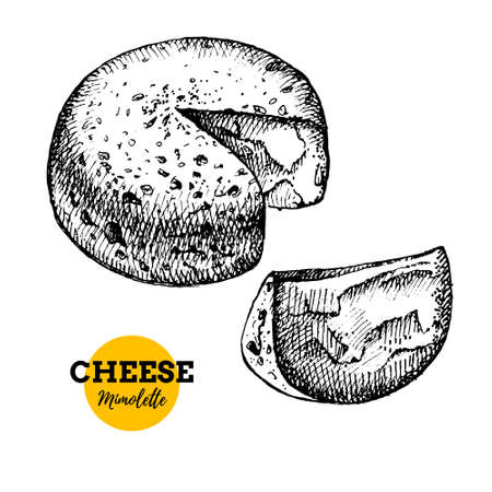 Hand drawn sketch cheese mimolette background. Vector illustration of natural milk foods
