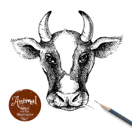 Hand drawn sketch cow head illustration. Isolated portrait on white background. Milk products poster. Vector black and white vintage banner 向量圖像