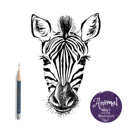 Hand drawn sketch zebra head illustration. Isolated cute portrait on white background