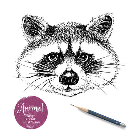 Hand drawn sketch raccoon head illustration. Isolated cute portrait on white background