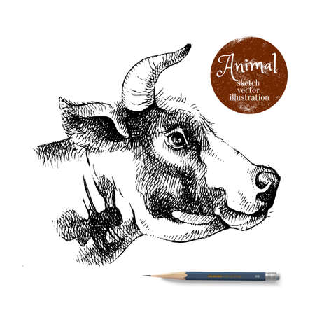 Hand drawn sketch cow profile head illustration. Isolated portrait on white background. Milk products poster. Vector black and white vintage banner