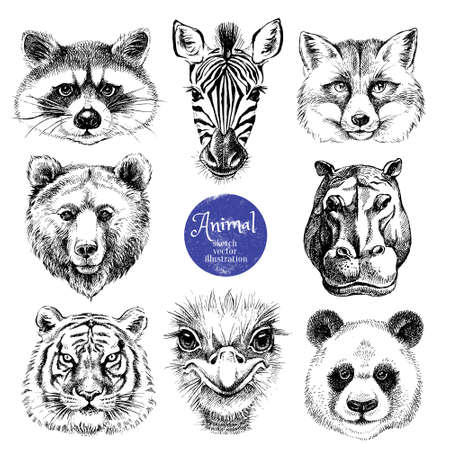 Hand drawn sketch animal heads vector illustration. Isolated cute trendy portraits of fox, raccoon, zebra, hippo, panda, ostrich, tiger, bear on white background Ilustración de vector
