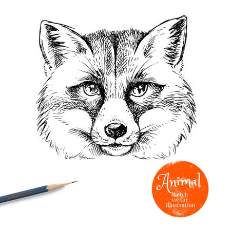 Hand drawn sketch fox head illustration. Isolated cute portrait on white background