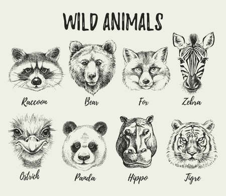 Hand drawn sketch animal heads illustration set. Isolated cute trendy portraits of fox, raccoon, zebra, hippo, panda, ostrich, tiger, bear on white background