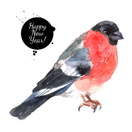 Watercolor bullfinch. Hand drawn isolated christmas illustration