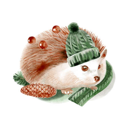 Watercolor winter forest wild animal. Hedgehog. Painted isolated hand drawn illustration. Banco de Imagens