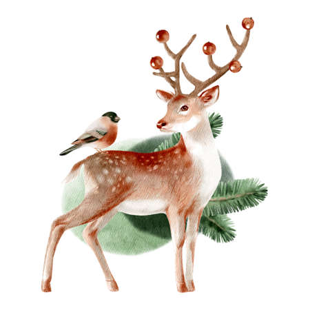 Watercolor winter forest wild animal. Deer. Bullfinch. Painted isolated hand drawn illustration.