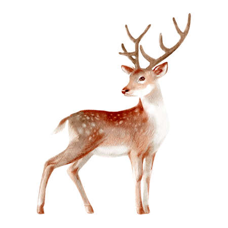 Watercolor winter forest wild animal. Deer. Painted isolated hand drawn illustration.