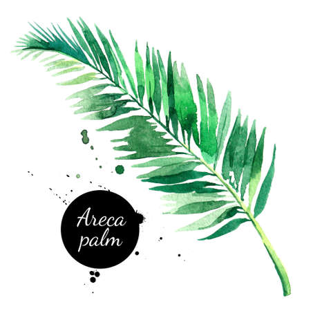 Hand drawn sketch watercolor tropical leaf of areca palm. Painted isolated exotic nature illustration Banco de Imagens