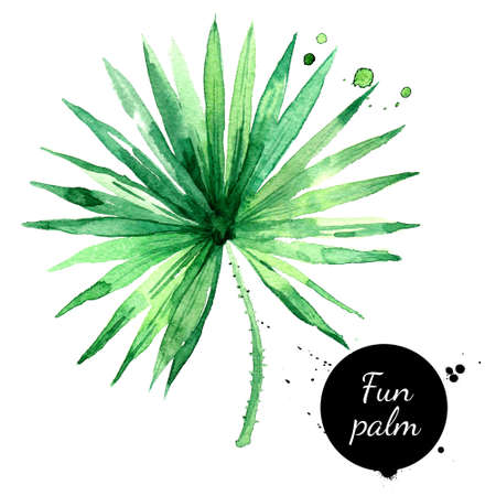 Hand drawn sketch watercolor tropical leaf fun palm. Painted isolated exotic nature illustration