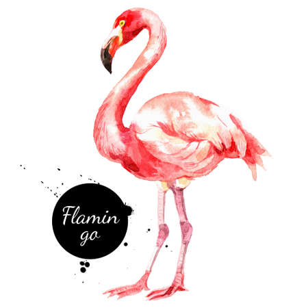 Hand drawn sketch watercolor tropical bird flamingo. Painted isolated exotic nature illustration Banco de Imagens