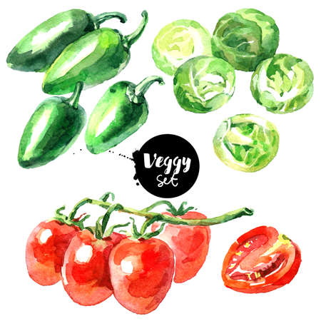 Watercolor vegetables set. Painted isolated natural organic fresh eco food illustration on white background. Veggies design of brussels sprouts, jalapeno, tomato