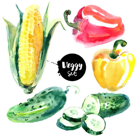 Watercolor vegetables set. Painted isolated natural organic fresh eco food illustration on white background. Veggies design of cucumber, corn, pepper