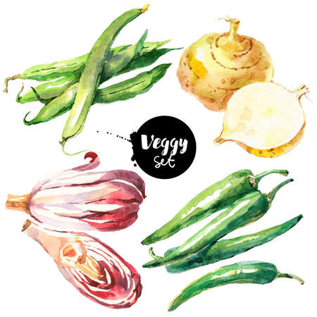 Watercolor vegetables set. Painted isolated natural organic fresh eco food illustration on white background. Veggies design of radicchio, green beans, green chili, jicama Banco de Imagens