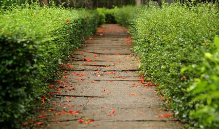 cement road has the petal falls the footpath is the bush photo