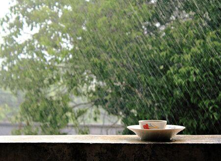 Rain on nature  Abstract background rain photo
