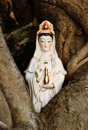 chinese holly: Quan Yin ( goddess of mercy ) of Chinese gods in wood trunk  Stock Photo