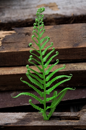 Fern leaf with Large stack of wood planks photo