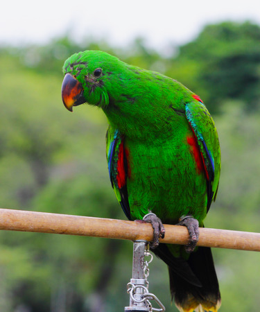 Beautiful and colorful isolated parrot  photo