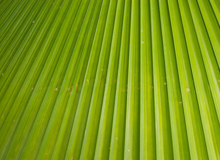 close up beautiful palm leaves of tree in sunlight photo
