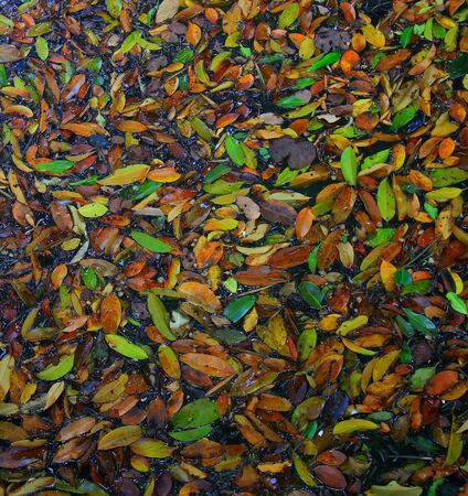 Fall Leaves in the water. Autumn lake, fallen leaves photo