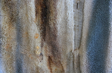 Dirty cloth photo