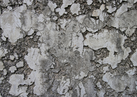 crackle: old dirty wall