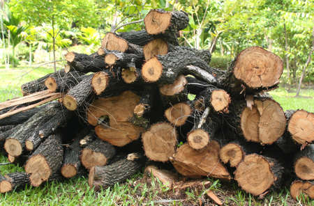 storing: timber texture, log, timber, beam, block